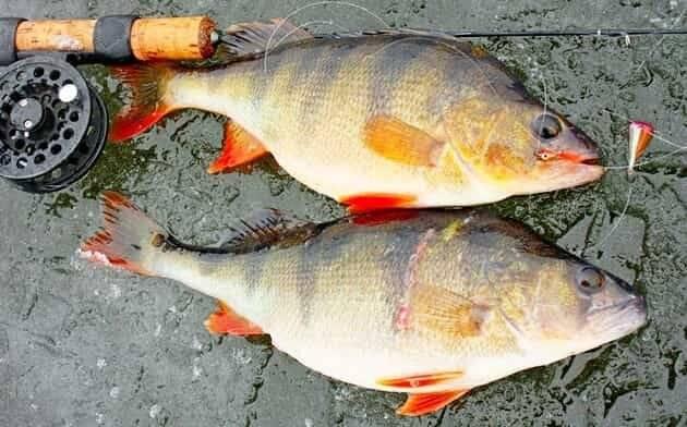Как сделать мормышку уловистой чтобы клёв не прекращался | душевная рыбалка | яндекс дзен