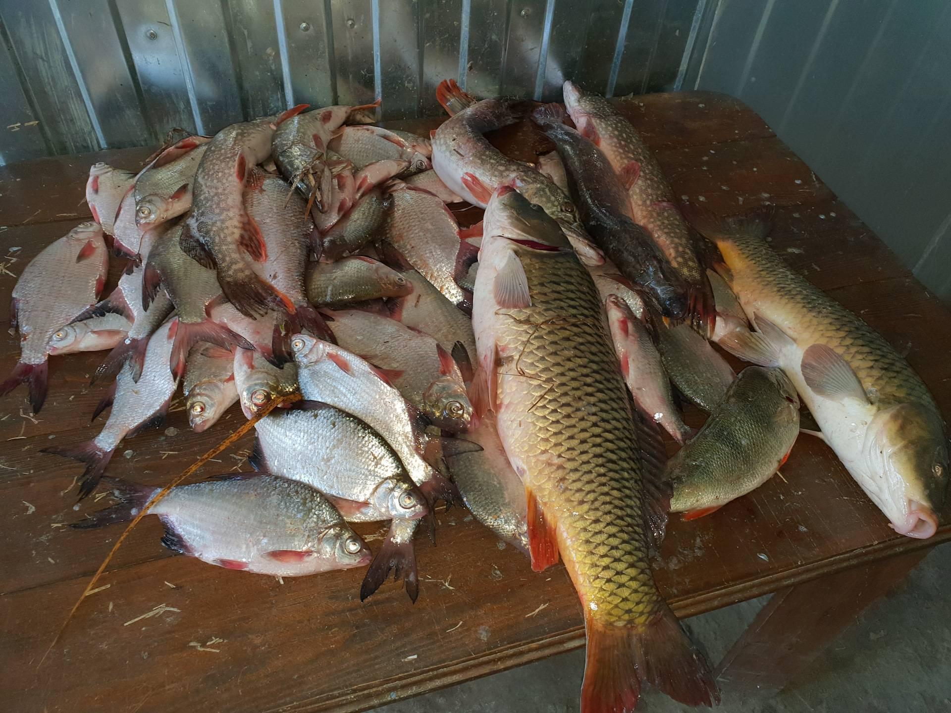 Рыбалка в одинцовском районе – платная и бесплатно, дубки, раскаты, барвиха