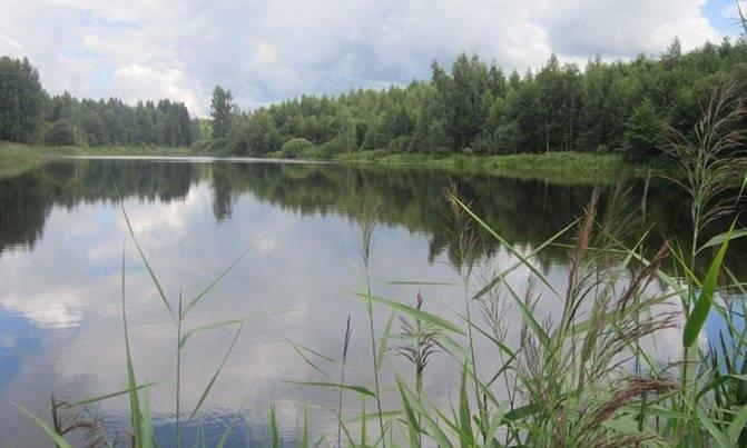 Карта рыболовных мест рязанской области | описание и фото