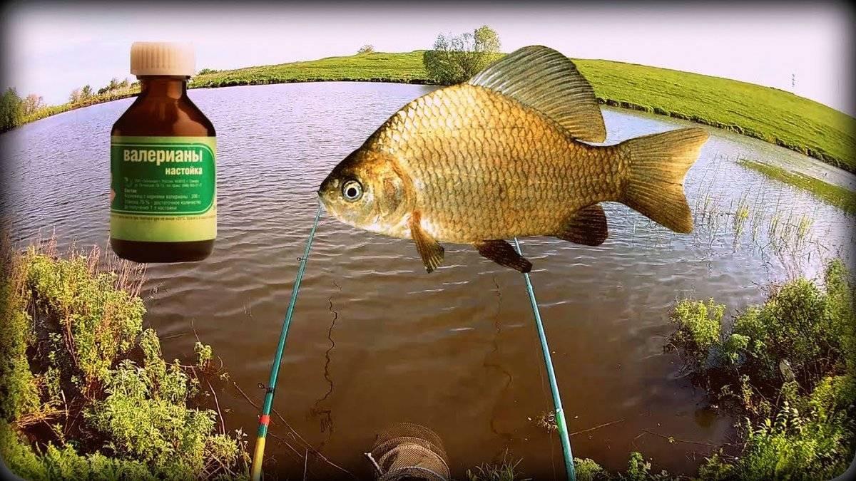 Рыбалка в сентябре: какая рыба клюет, особенности ловли в начале осени