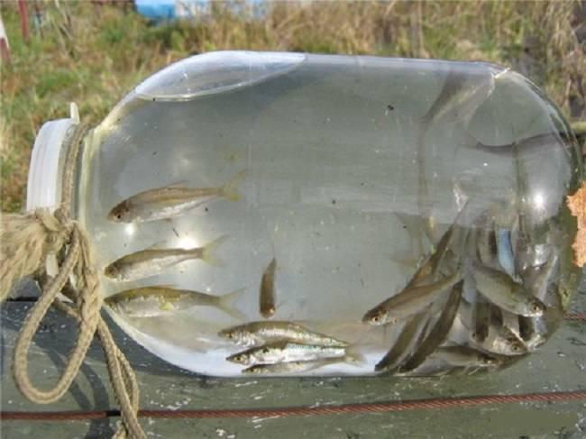Как правильно хранить живца зимой вквартире - статьи о рыбалке