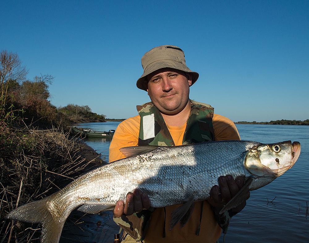 Верховка: описание рыбы, содержание в аквариуме и уход + фото