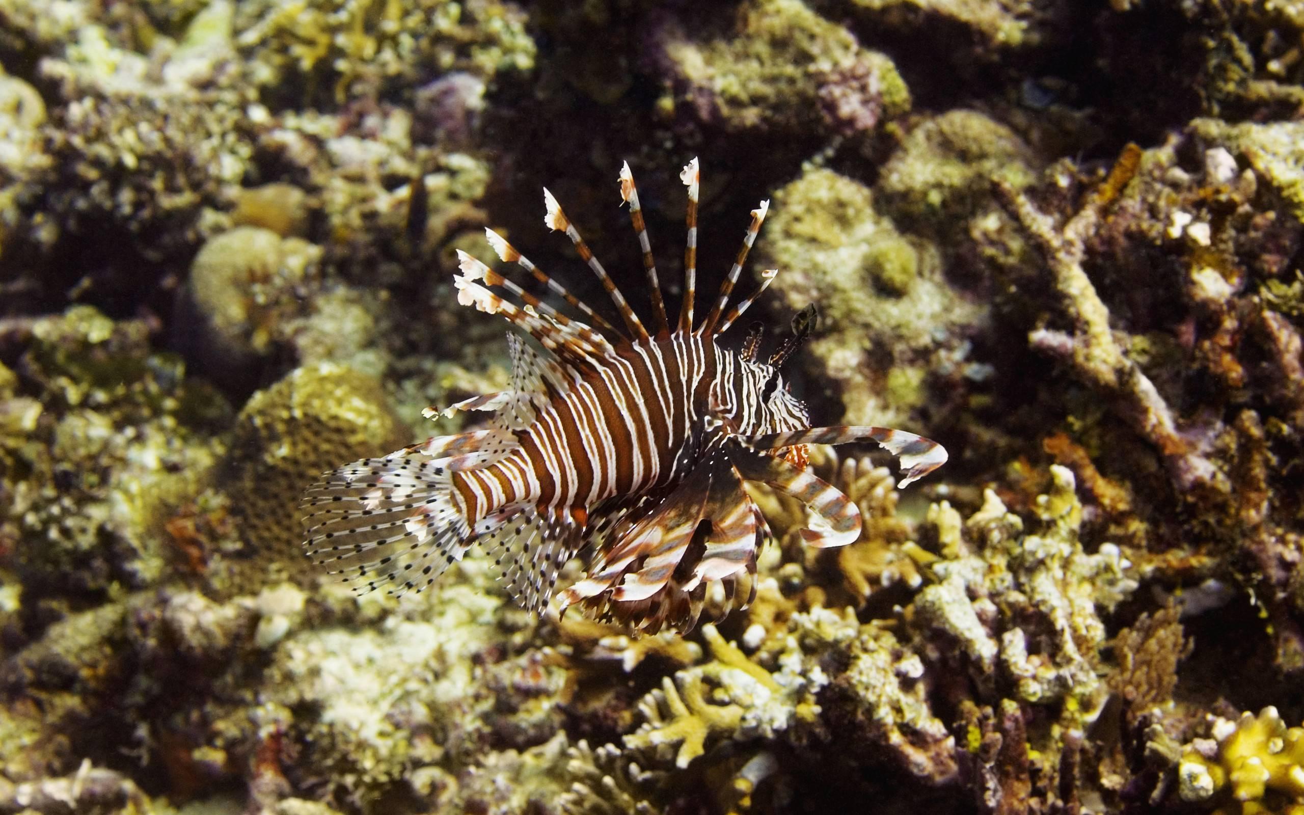 Опасные рыбы красного моря – названия и фото
