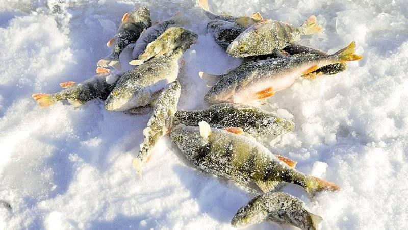 Как ловить рыбу в глухозимье — места, снасти и приманки | lovitut.ru (рыбалка и бильярд) | яндекс дзен