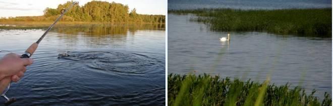 Платная рыбалка в тольятти, самаре и самарской области