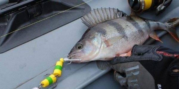 Мандула на судака своими руками - читайте на сatcher.fish