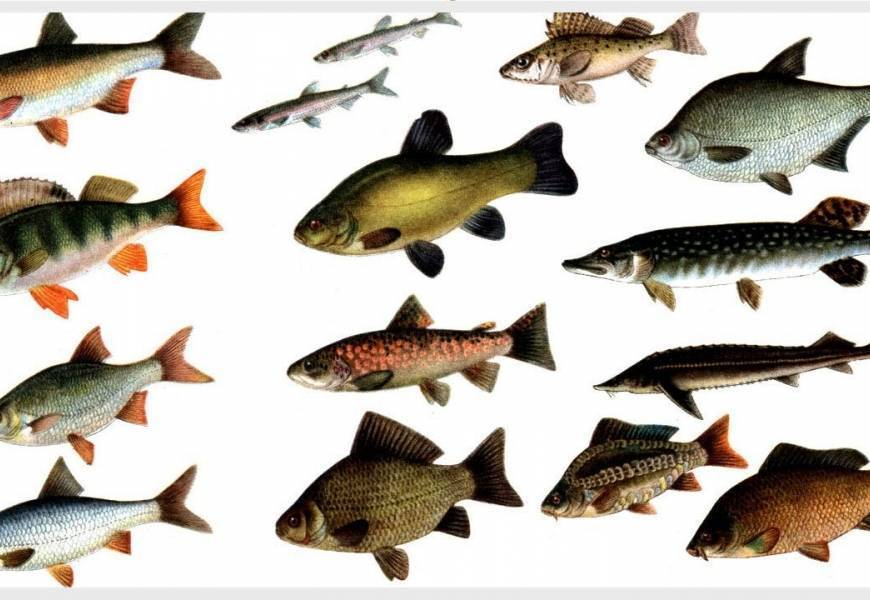 Рыбалка в витебской области: видео, отчеты, озера, рыбалка платная и бесплатно