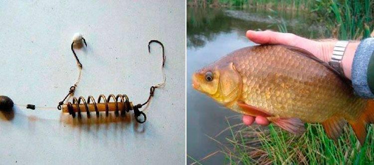 Лучшие методы ловли карася весной – особенности и хитрости - на рыбалке!