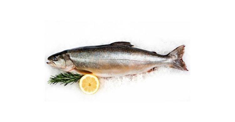 Голец – рыба из семейства лососевых и ее фото