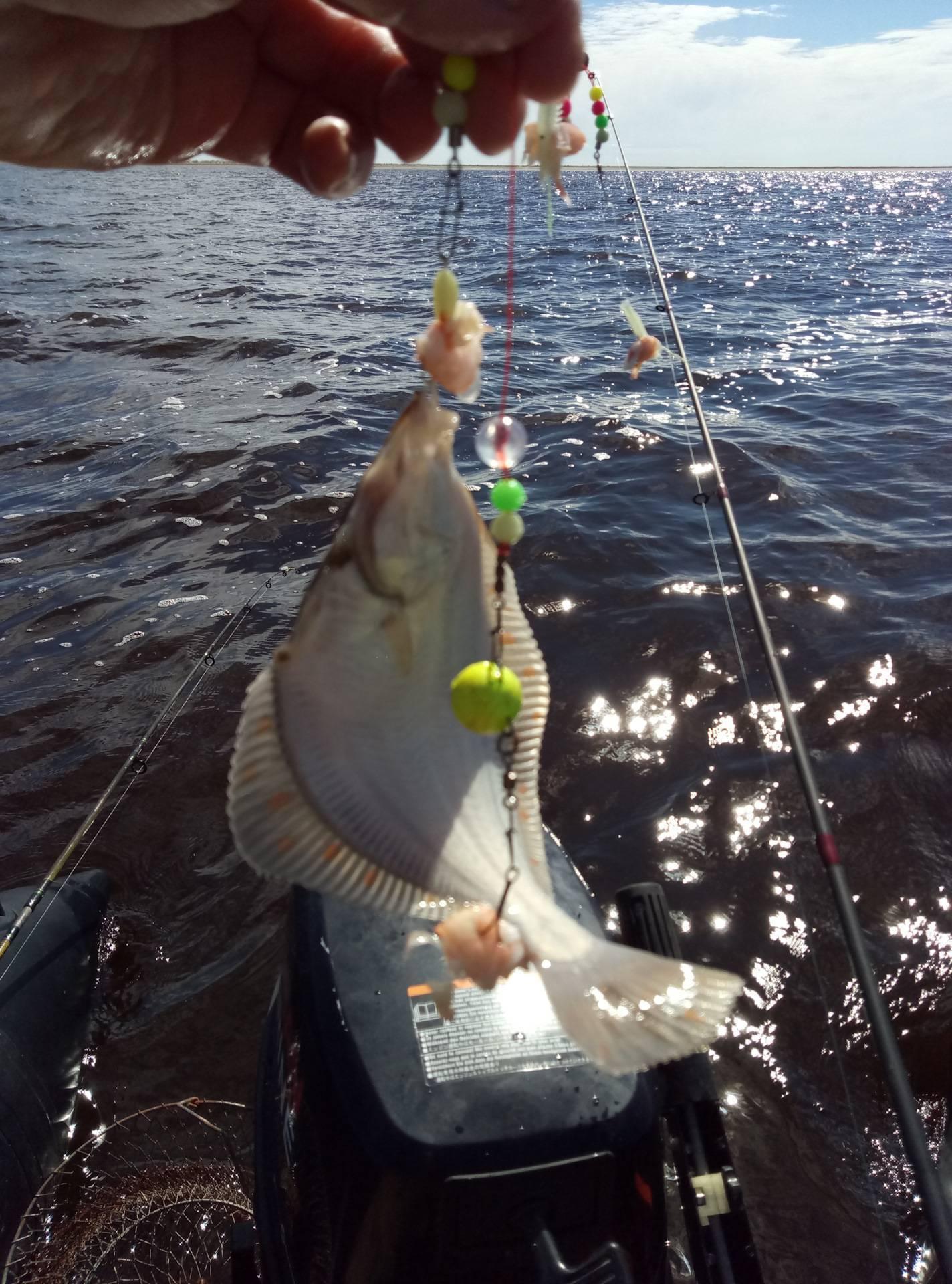 Ловля камбалы — снасти, советы рыболовам