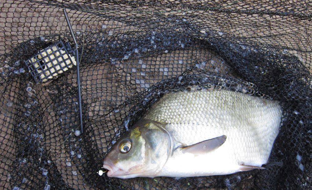 ✅ ловля на пенопласт видео под водой - уголок-рыбака.рф