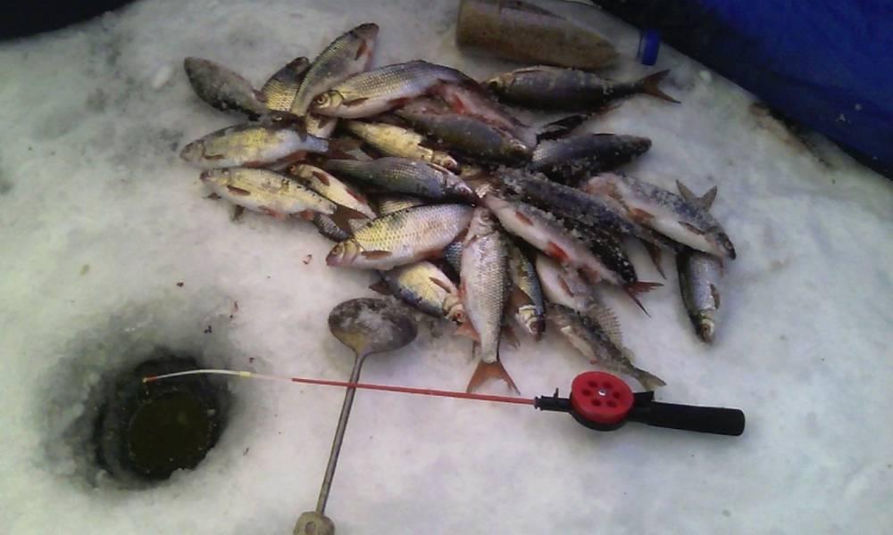 Правильная насадка опарыша на крючок – все лайфхаки и советы для рыбалки на одном сайте
