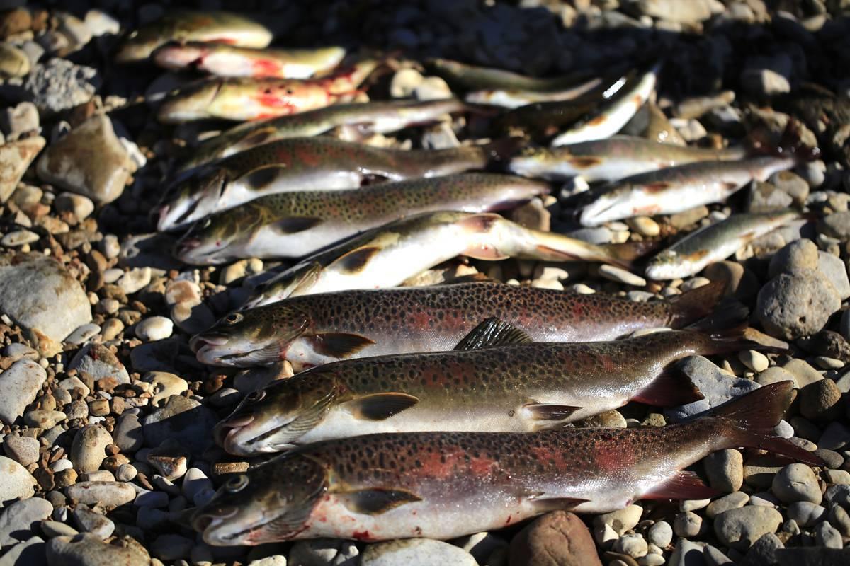 Goldrybak   всё о рыбной ловле! - part 8