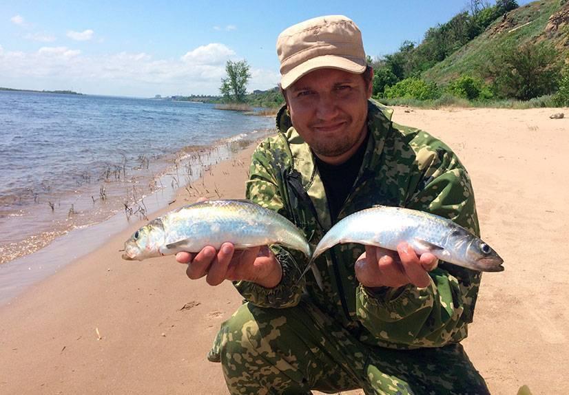 Донская селёдка жареная (don cossack fried herring)