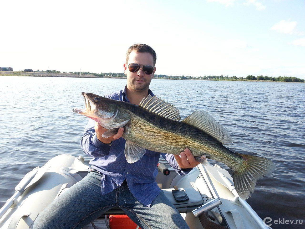 Река шоша: для рыбалки в московской и тверской областях