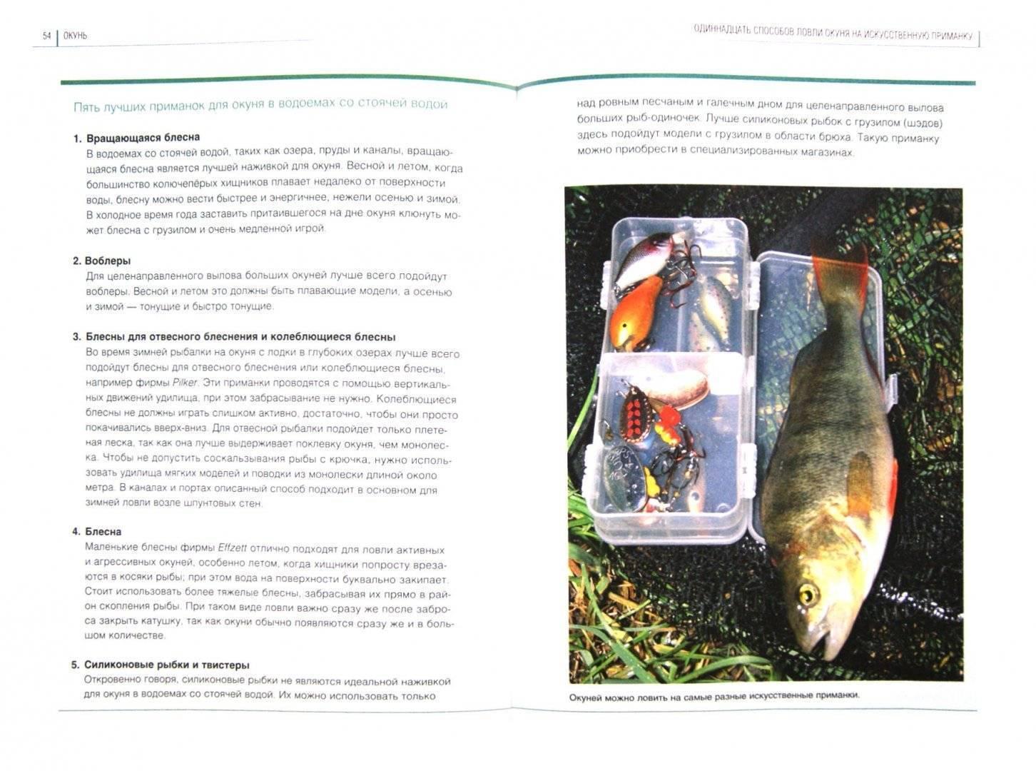 Поймать большую рыбу. медитация, осознанность, творчество -  дэвид линч читать онлайн бесплатно