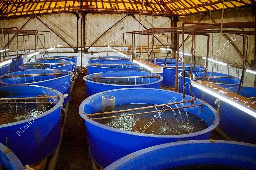 Рыба для кремля. история одного из старейших рыбохозяйств россии — журнал «агротехника и технологии» — агроинвестор