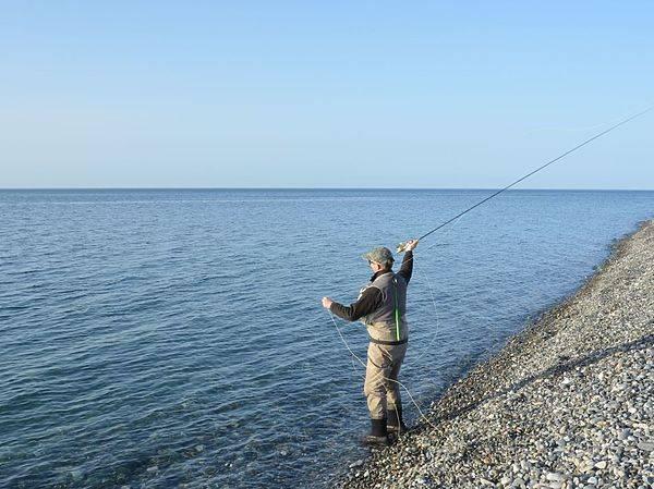 Снасть для ловли саргана в балтийском море - рыба
