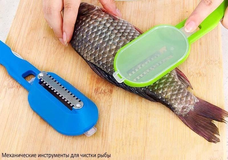 Как правильно почистить свежего и замороженного линя в домашних условиях