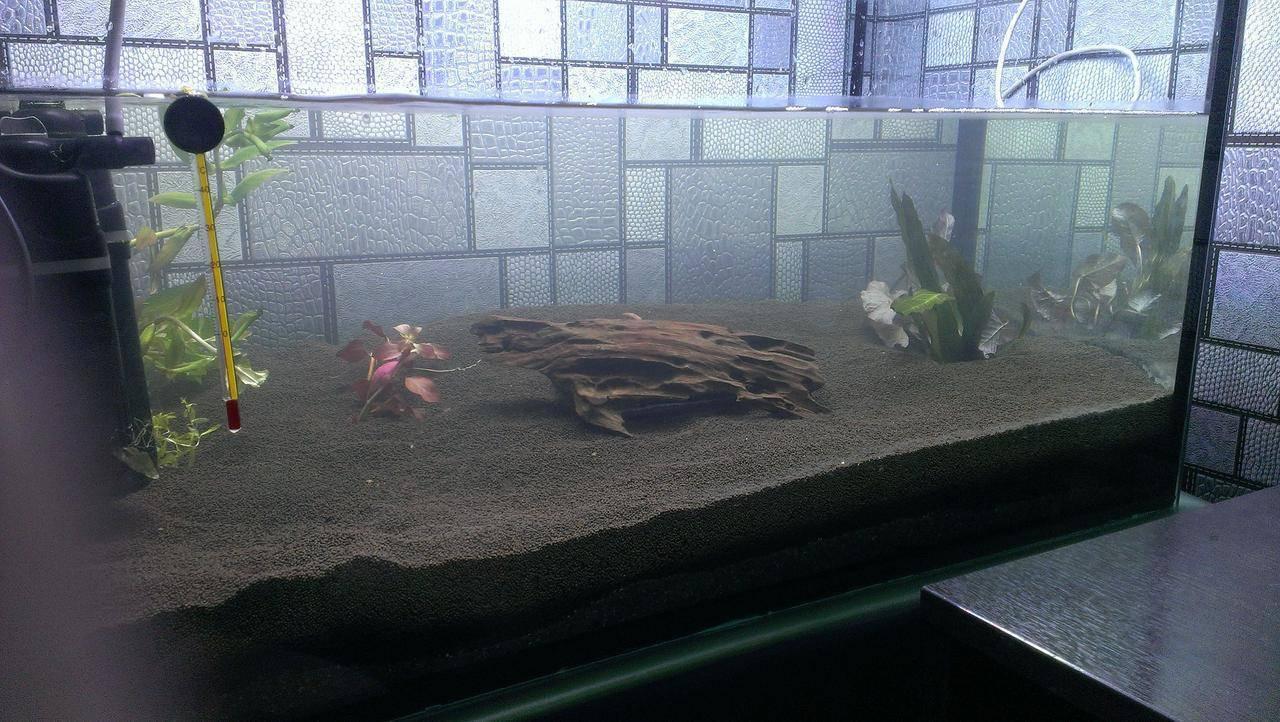 Запуск аквариума: правила и пошаговая инструкция