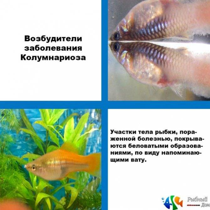 Лечение аквариумных рыб. методы лечения
