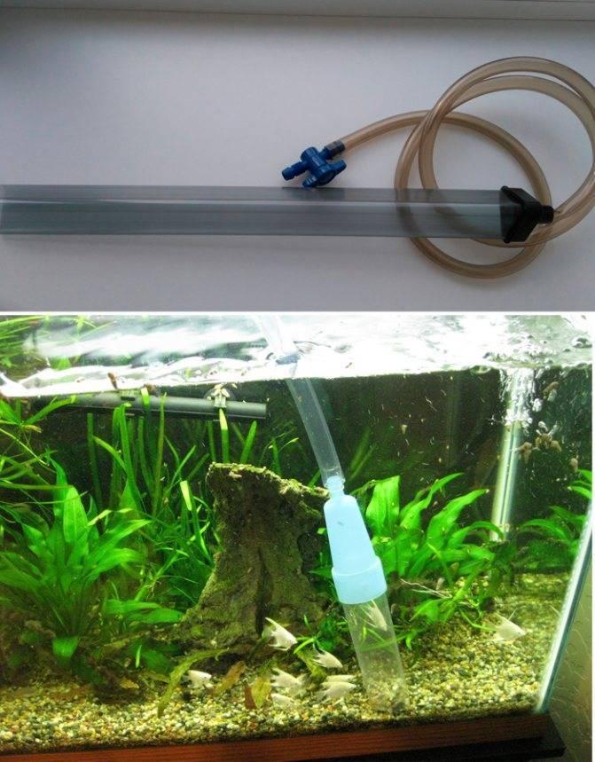 Известковый налет в аквариуме: как отмыть в домашних условиях, возможно ли очистить механическим способом или лучше убрать с помощью химии, профилактика появления