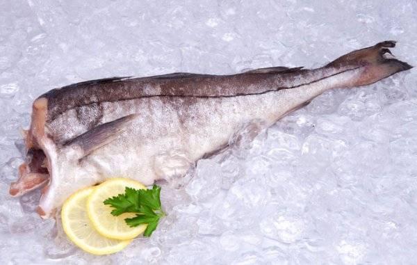Сайда — описание рыбы, образ жизни, ловля, рецепты, фото и видео