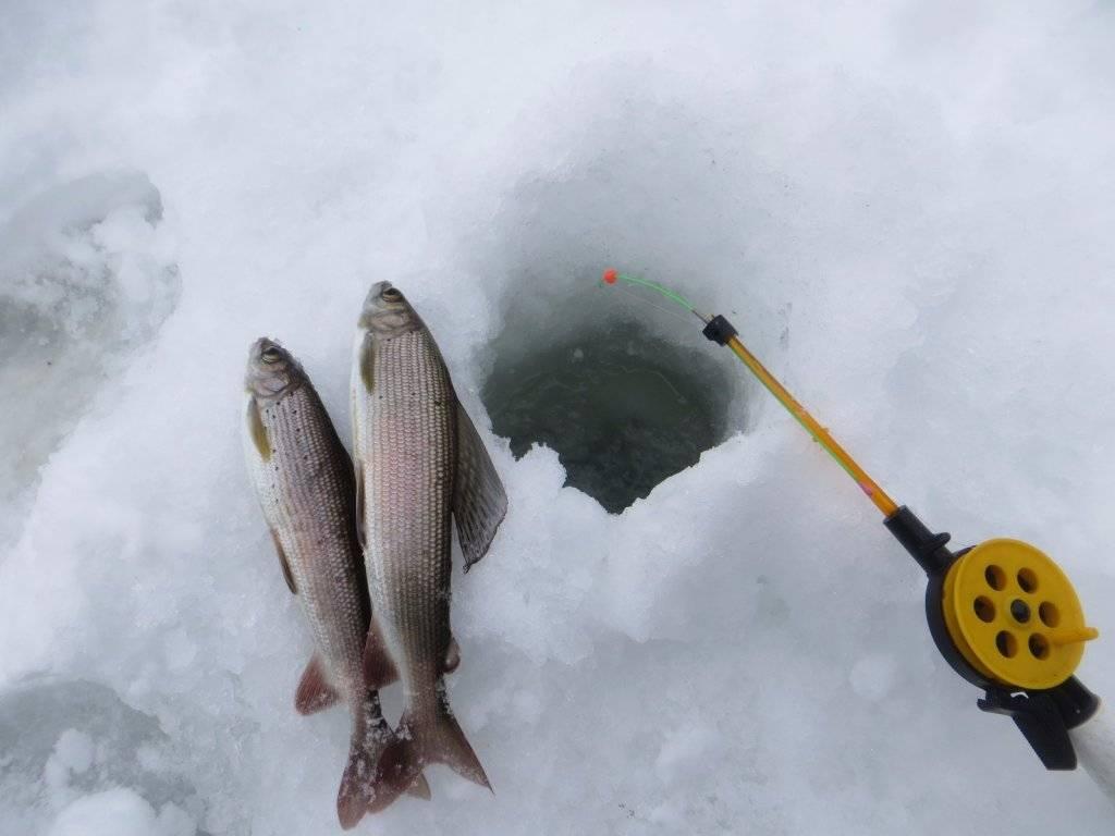 Ловля хариуса зимой. как поймать хариуса? - на рыбалке!