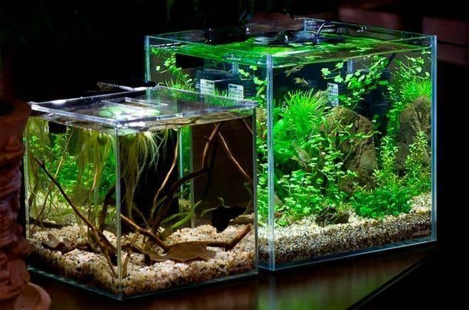 Нано-аквариум или все о кубиках!