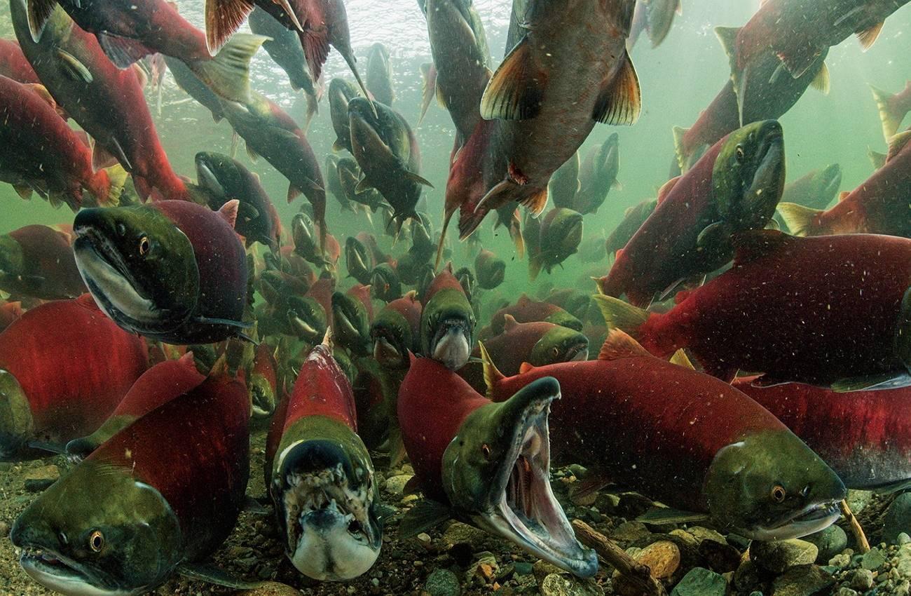 Особенности ухода за аквариумными сомиками