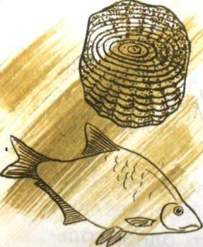 Как определить возраст рыбы по чешуе и другие способы