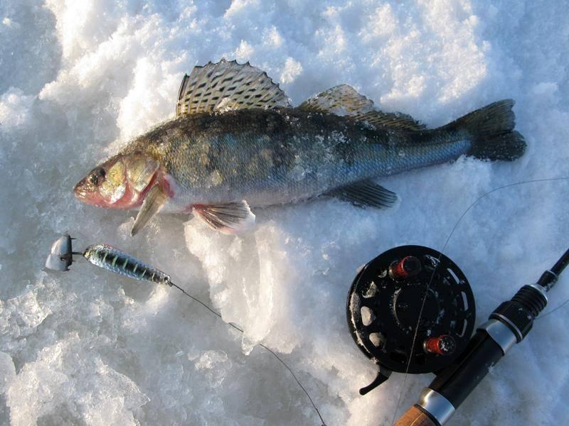Ловля судака на тюльку зимой, снасти для ловли судака на тюльку