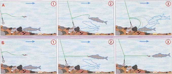 Отправляемся ловить хариуса: готовимся к процессу правильно – рыбалке.нет