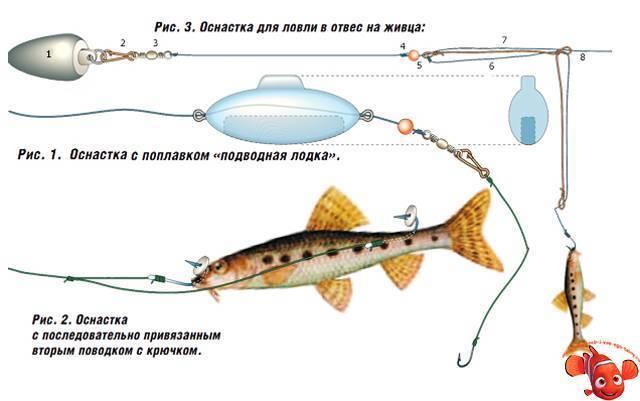 Ловля судака на живца: различные техники, выбор живца, ловля с берега, снасти