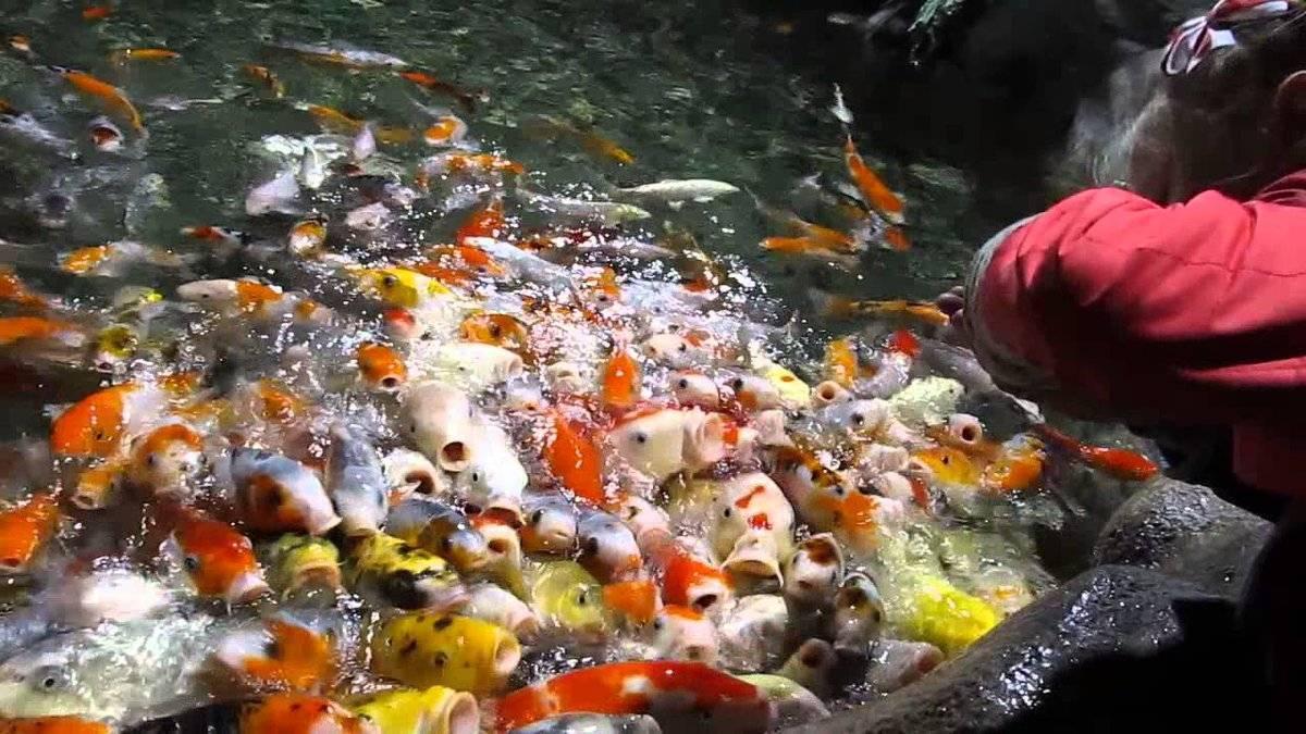 Пруд для разведения рыбы своими руками: пошаговая инструкция с фото