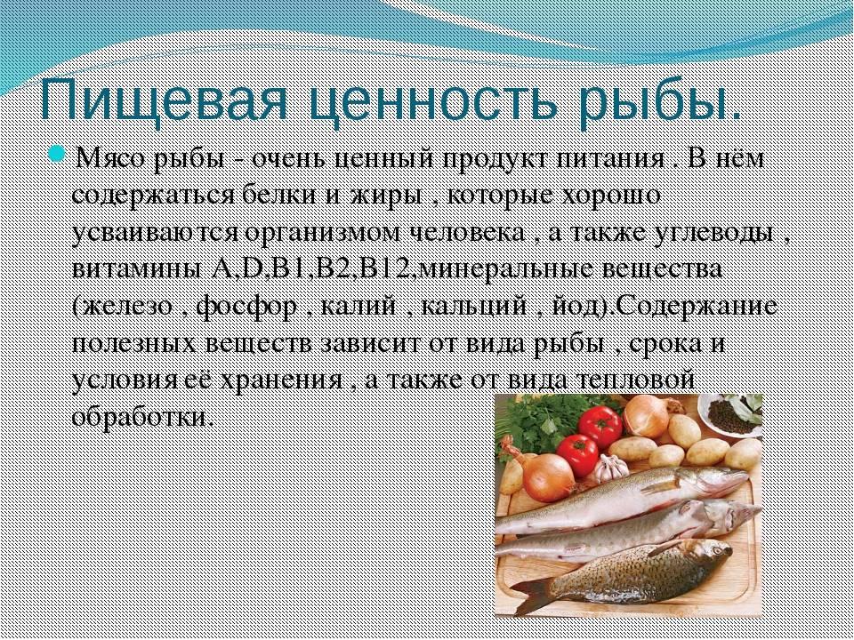 Рыбы наших рек — чем они питаются