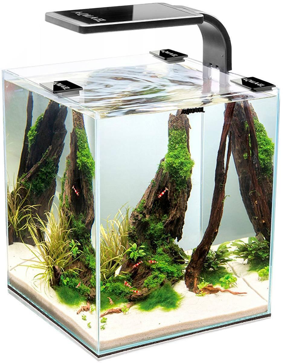 Настенный аквариум: разновидности, особенности установки | дом мечты