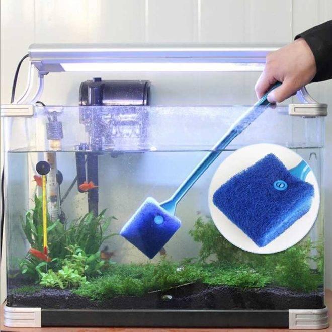 Аквариум: как почистить подводный мир в домашних условиях