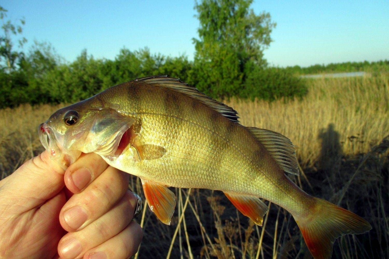 Рыбалка в Томске и Томской области