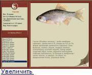 Обыкновенный горчак — википедия. что такое обыкновенный горчак