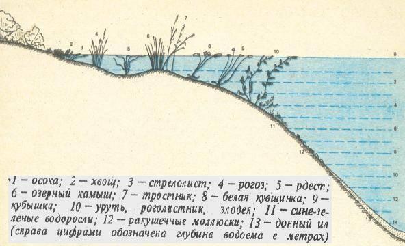 Статья 5. поверхностные водные объекты и подземные водные объекты