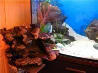 Декорации для аквариума своими руками декорации для аквариума своими руками