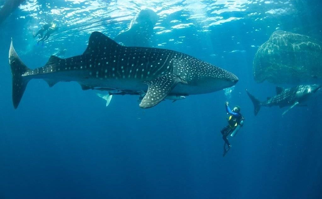Топ 11 самых странных, уродливых и страшных рыб морей и океанов