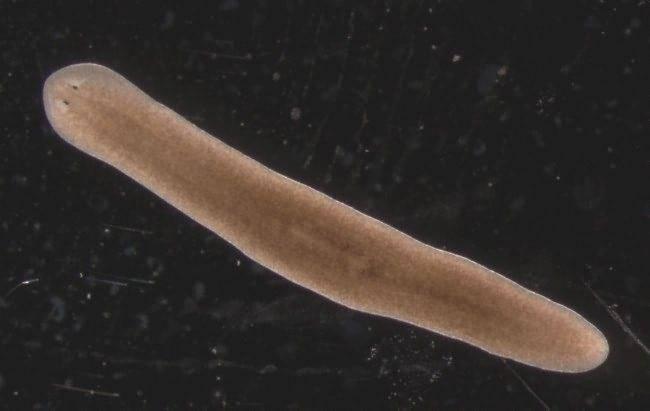 Нематоды в аквариуме: как избавиться от паразитов?
