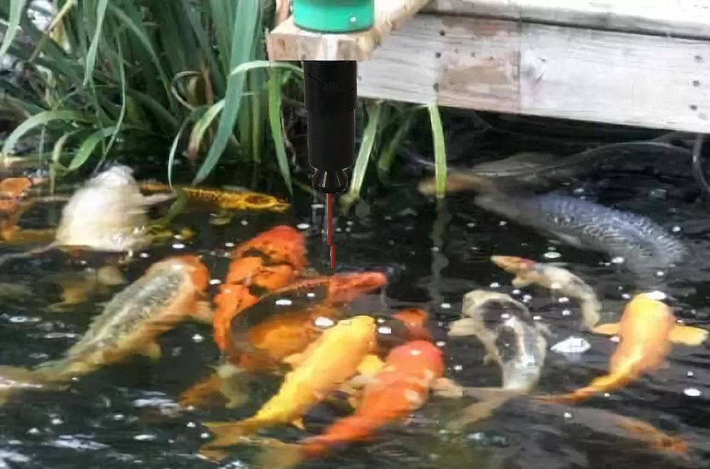 Пруд для разведения рыбы своими руками