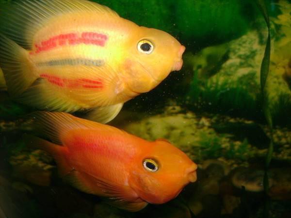 Какая память у рыб? эксперементы и различия в видах. сколько секунд длится память у рыб: мифы о домашних рыбках