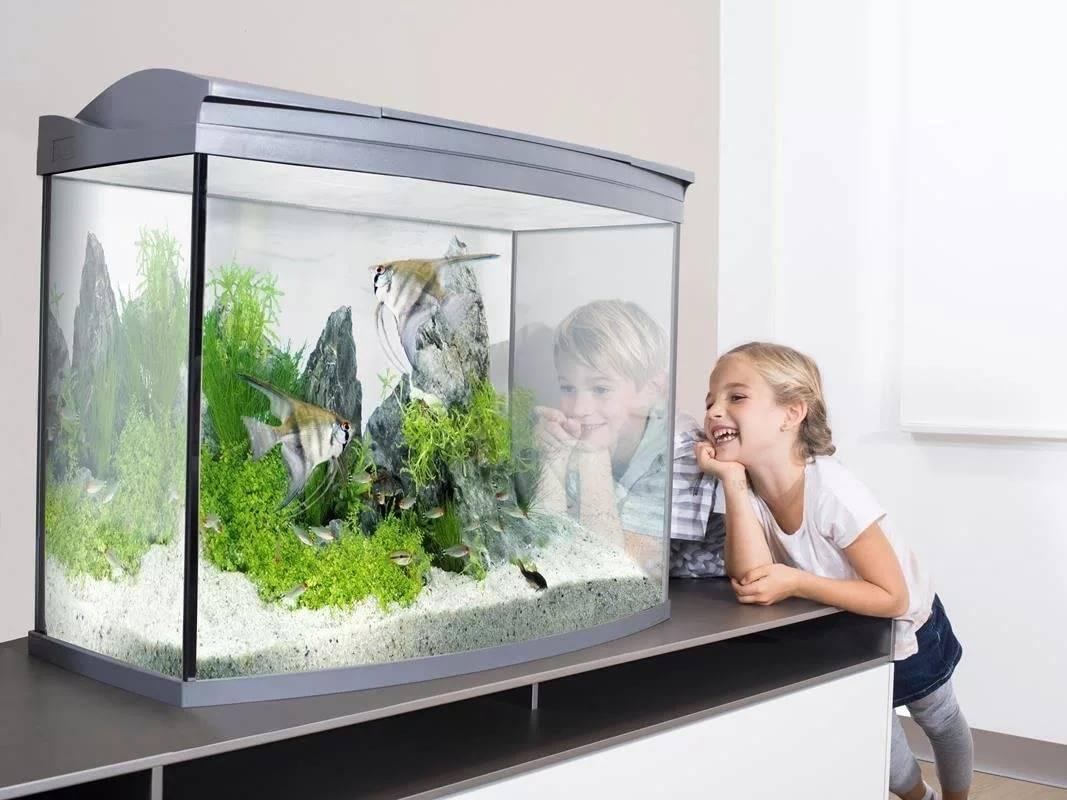 Лучший размер аквариума для начинающих — маленький или большой аквариум?
