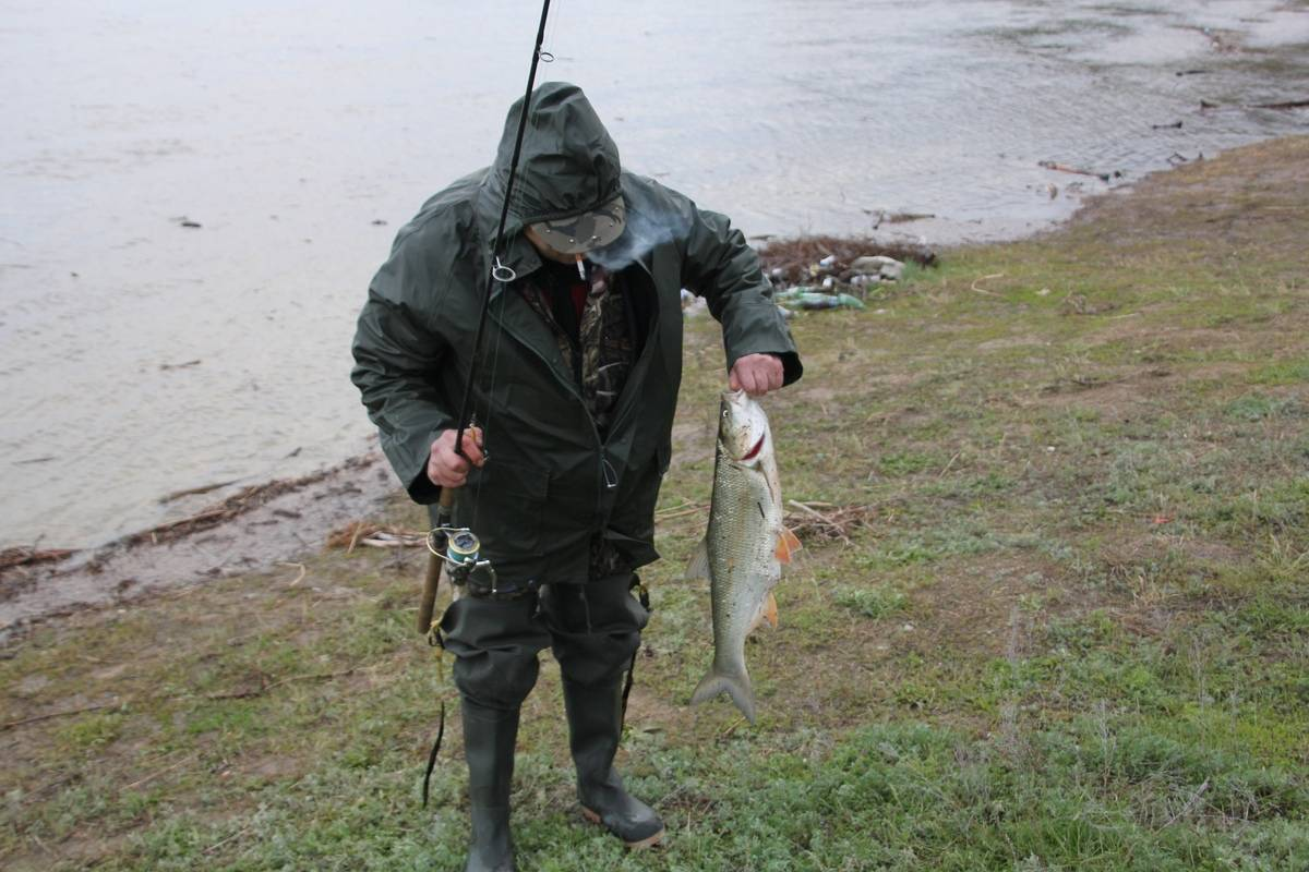 Платные пруды в саратове для рыбалки: какую рыбу можно ловить
