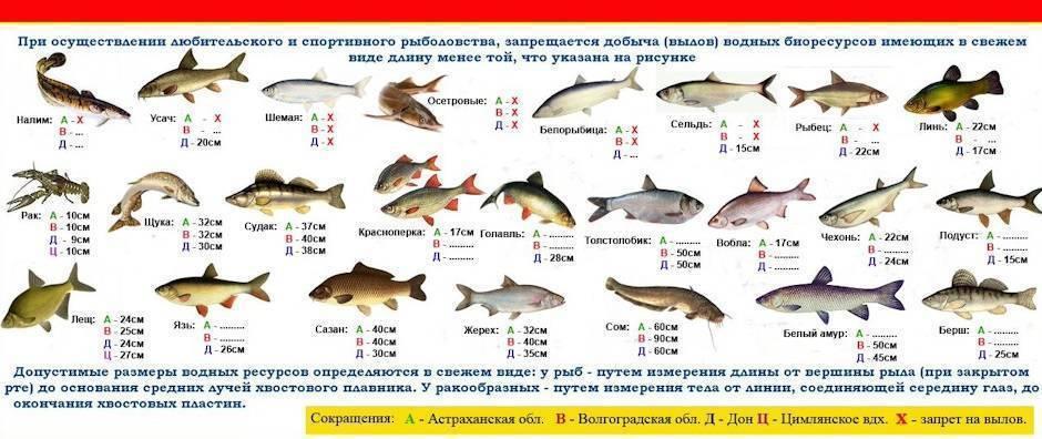 Какой штраф за ловлю раков в московской области