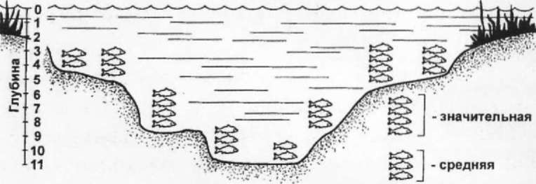 Рыба ищет, где глубже, а человек ищет рыбу глубиномером